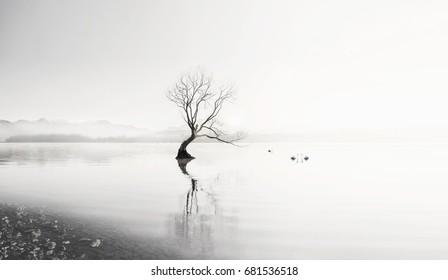 The Lonely Tree of Lake Wanaka South Island New Zealand