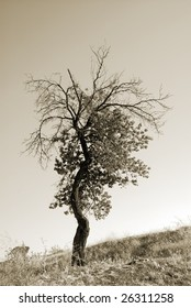 Lonely tree. Landscapes of Cappadocia, Turkey. Monochrome sepia toned version