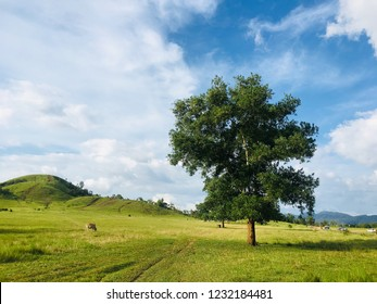Lonely tree in meadow.