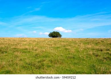 Lonely tree in a meadow on blue sky.