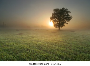 Lonely tree in the middle of field at sunrise