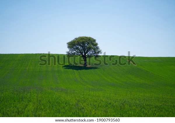 lonely tree in the middle of green