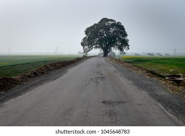 Lonely tree in the middle of the road