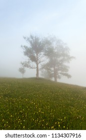 Lonely tree in the mist at the morning mountains landscape