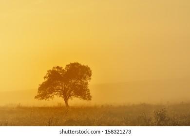 Lonely tree in the mist, nature autumn season