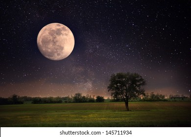 Lonely tree and moon