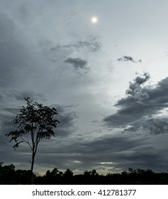 Lonely tree with most cloudy sky.