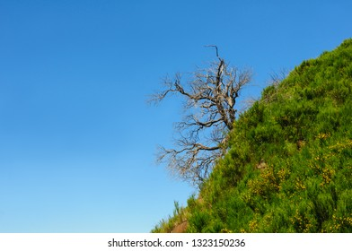 Lonely tree. Mountain landscape. View of mountains on the route Pico Areeiro - Pico Ruivo, Madeira Island, Portugal, Europe