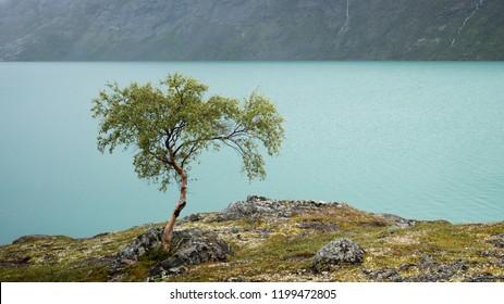 Lonely tree near a Mountain Lake