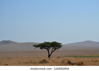 Lonely tree on the African landscape