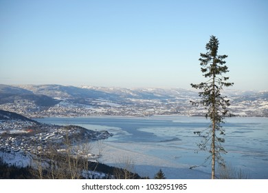 Lonely tree on background of Drammen fjord in winter time. Norway.
