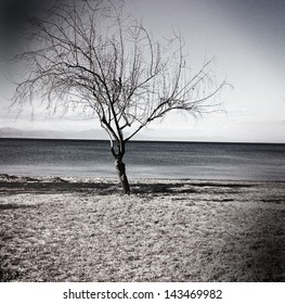 Lonely tree on a beach