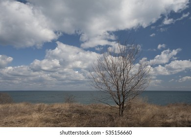 Lonely tree on the beach.