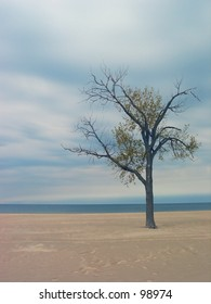 Lonely tree on a beach.