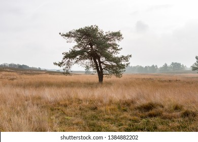 A lonely tree on a cloudy day on the beautiful Asselsche heath near the village of Hoog Soeren, Gelderland the Netherlands