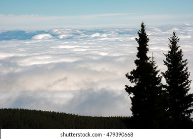 Lonely tree on a Cloudy Mountain