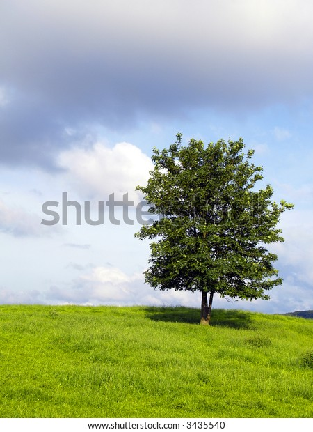 lonely tree on a feedlot