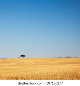 Lonely tree on a golden field with clear blue sky. Alentejo, Portugal.