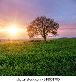 A lonely tree on a green hill during sunset. A beautiful sunset among the tuscany hills. Purple sky with clouds at sunset. Italy.