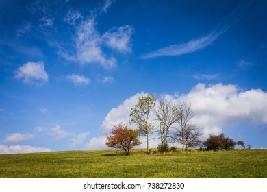 Lonely tree on a hill against a blue sky with clouds