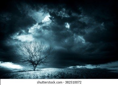 lonely tree on the hill with dark clouds in winter time, snowstorm