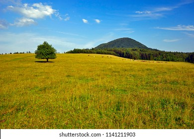 The lonely tree on hill under sunny blue sky with clouds. Lovely mountainous landscape in summer, Low Beskid (Beskid Niski), Poland