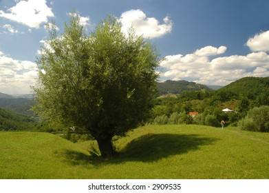 Lonely tree on the hills under the summer sky