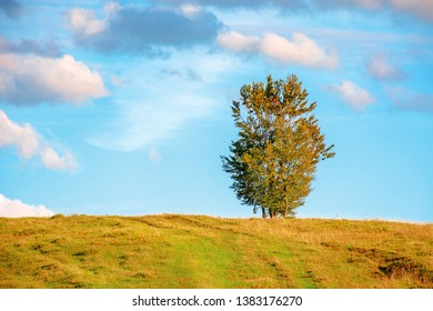 lonely tree on the hillside in warm evening light. beautiful countryside scenery at sunset. weathered grass on the meadow. gorgeous turquoise sky with dynamic clouds.