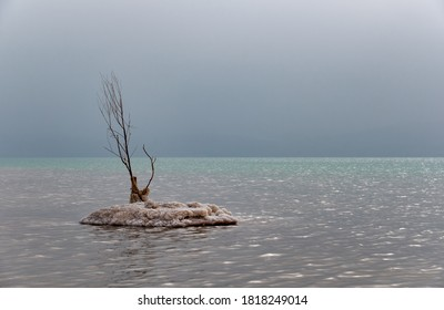 Lonely tree on an island of salt in the Dead sea, Israel. Silence and calm on the Dead Sea, the lowest point on the surface of the earth.