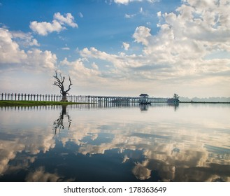 Lonely tree on a lake in Myanmar