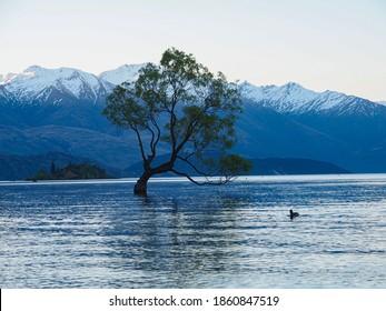 Einsamer Baum auf dem Wanaka-See, Neuseeland mit Schneeberg auf dem Hintergrund und Ente