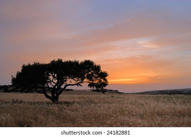Lonely tree on a meadow at a dawn