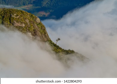 Lonely tree on mountain surrounded by low haze