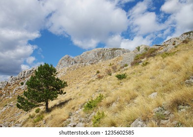 Lonely tree on the mountainside with scorched grass