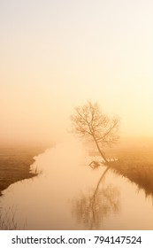 Lonely tree on the river in misty sunrise