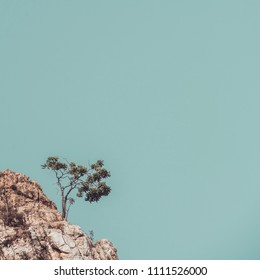 A lonely tree on the rock mountain in vintage tone