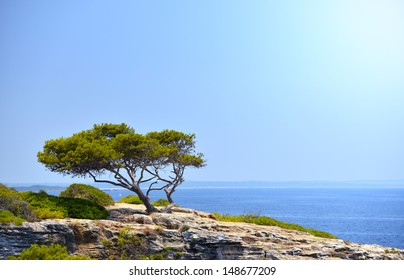 Lonely Tree on the Rock in the Sunshine in Mallorca, Spain ( Balearic Islands )