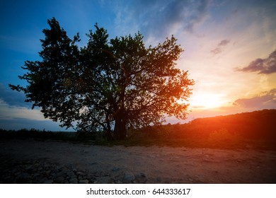 lonely tree on sunset