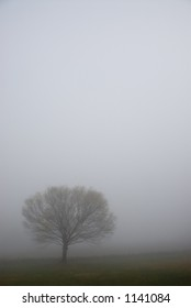 Lonely Tree on a very foggy morning