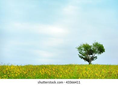 lonely tree on the wide flower field in Hokkaido