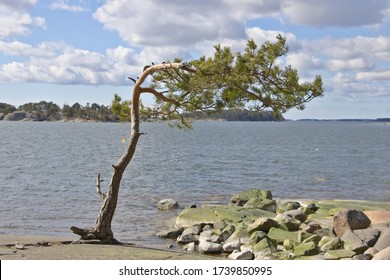 A lonely tree onshore on a windy day