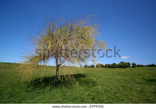 Lonely tree in park with blue sky