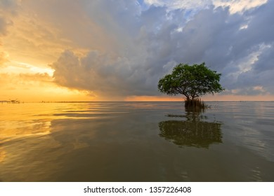 Lonely tree in sea with the morning sunlight in background, natural tropical scene.