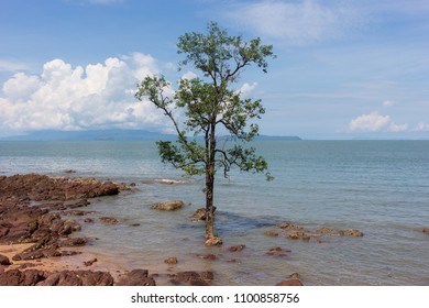 lonely tree in the sea at petra natinoal park in satun, thailand
