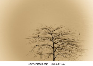 lonely tree in sepia color concept
