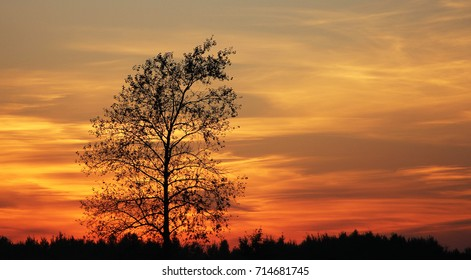 Lonely tree. Silhouette of tree on sunset background