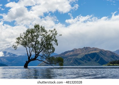 A lonely tree is silhouetted in a lake in the mountains.