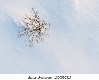 Lonely tree in the snow field from top