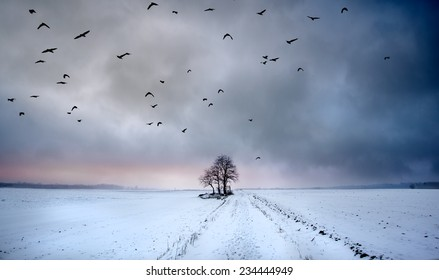 Lonely tree in the snowy field with birds