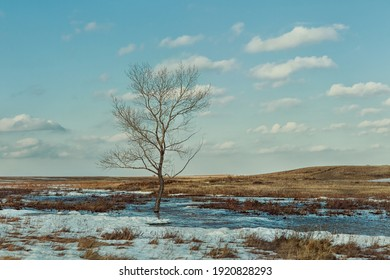 A lonely tree standing in a large plowed land or field with melting snow and thawed patches. Thawed patches. Nature wakes up. Spring is coming, the month of March. Early spring landscape.